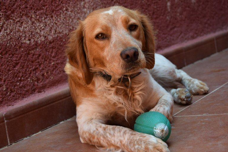 Consejos-a-la-hora-de-adoptar-un-perro