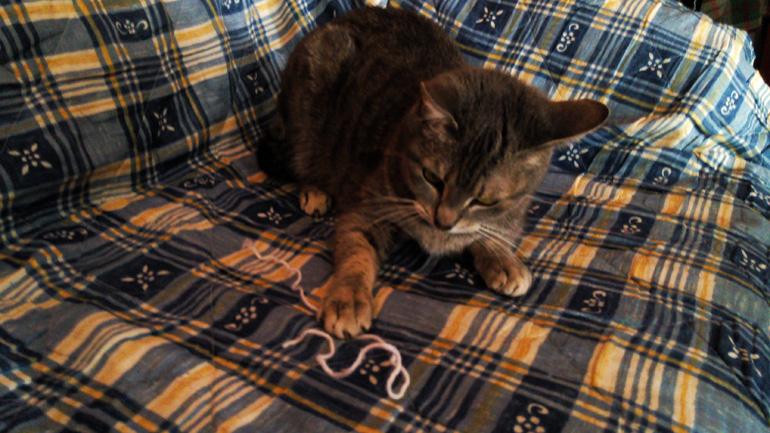 ¡A-jugar-con-mi-gata