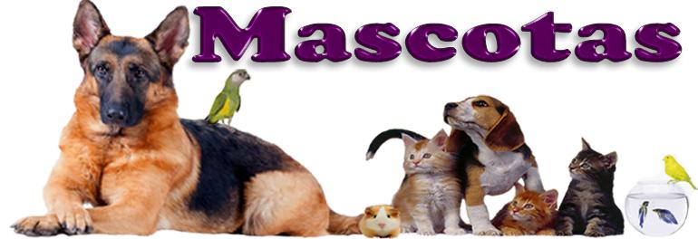 Banner Mascotas-770px