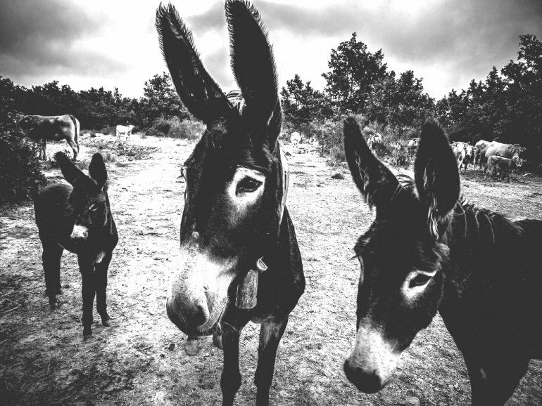 Bolaños La Guardia Civil recupera unas caballerías robadas en la feria de Almagro