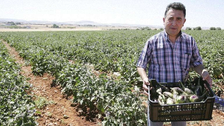 La Berenjena De Almagro pedirá ayudas al gobierno regional para salvaguardar el cultivo de nuestra berenjena