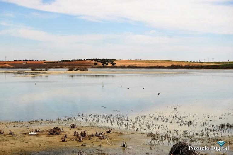 El Centro del Agua de Daimiel celebrará el Día de los Humedales con un recorrido por La Inesperada de Pozuelo de Calatrava y las lagunas de Puertollano y Almodóvar