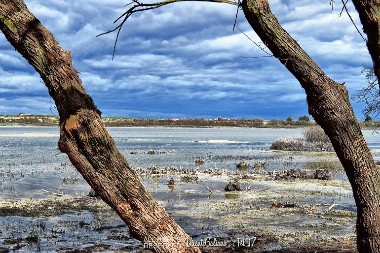 Dia de los Humedales en la Laguna La Inesperada de Pozuelo de Calatrava