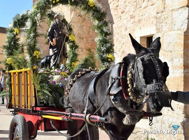 Pozuelo de Calatrava celebra esta semana la festividad de San Antón, protector de los animales